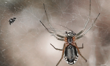 Araña - Fotografía Macro